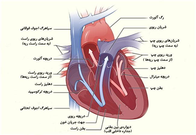 عروق قلبی